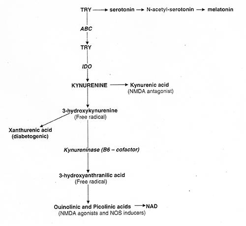 kynurenine-and-B6w